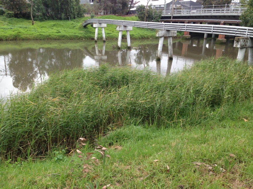 Moonee Ponds Creek near Arden St